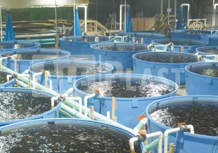Выращивание рыбы в условиях замкнутого водоснабжения 71